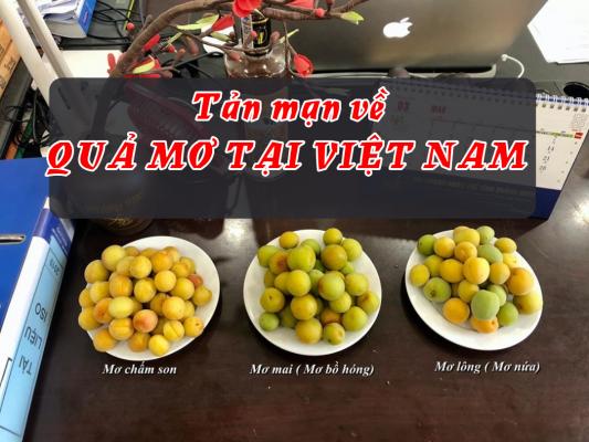quả mơ Việt Nam